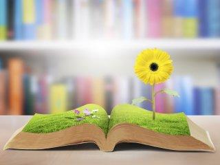 Creativity Training for Writers